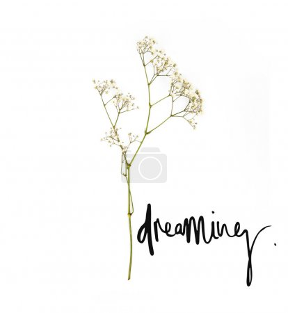small white flowers on twig with dreaming sign isolated on white