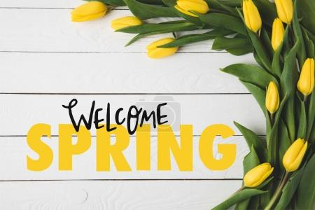 Photo for Top view of beautiful blooming yellow tulips and WELCOME SPRING lettering on white wooden surface - Royalty Free Image