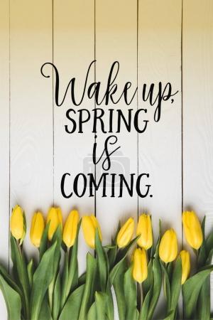Photo pour Vue de dessus de belles tulipes jaunes en fleurs et réveillez-vous. PRINTEMPS PROCHAINE lettrage sur la surface en bois blanc - image libre de droit