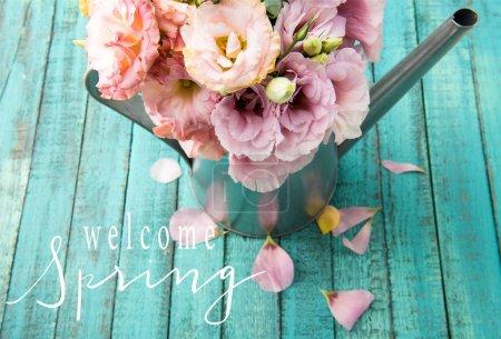 Photo pour Vue grand angle de belles fleurs tendres dans l'arrosoir et pétales roses sur la surface en bois avec lettrage BIENVENUE PRINTEMPS - image libre de droit