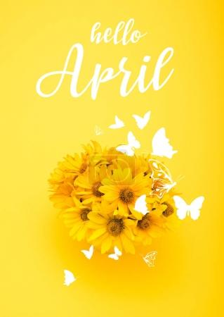 Top view of beautiful chrysanthemum flowers with HELLO APRIL sign