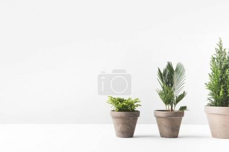 Photo for Beautiful various green home plants growing in pots on white - Royalty Free Image