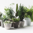 Various beautiful green plants in pots on white...