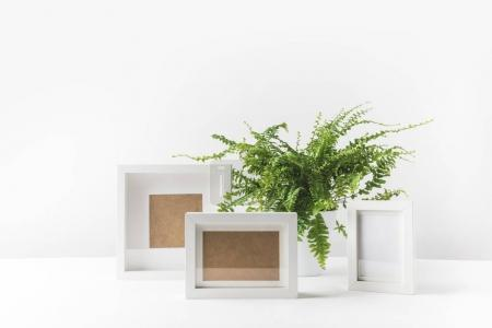 Photo for Beautiful potted fern and empty photo frames on white - Royalty Free Image