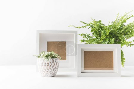 beautiful green houseplants in pots and empty photo frames on white