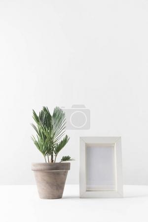 Photo pour Belle plante en pot vert et cadre photo vide sur blanc - image libre de droit