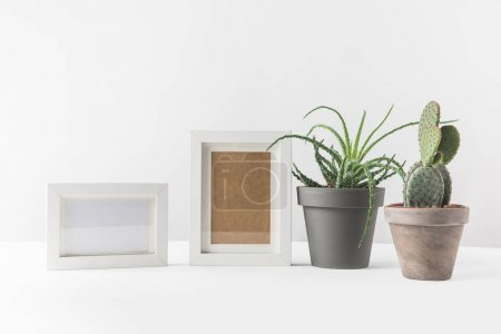 Photo for Green succulents in pots and empty photo frames on white - Royalty Free Image