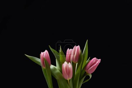 Bouquet of pink tulips isolated on black