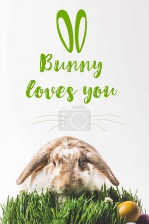 Photo pour Lapin regardant la caméra et assis sur l'herbe avec des œufs et lapin vous aime lettrage - image libre de droit