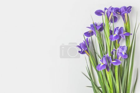 Photo for Beautiful iris flowers with green leaves on grey - Royalty Free Image