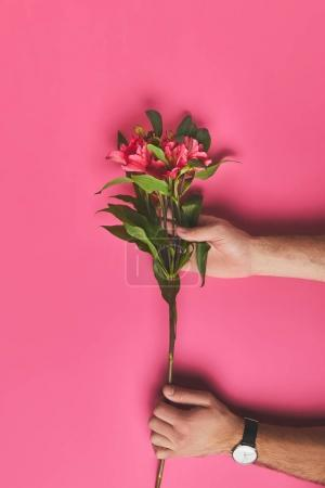 cropped shot of man holding branch of Alstroemeria flowers, mothers day concept