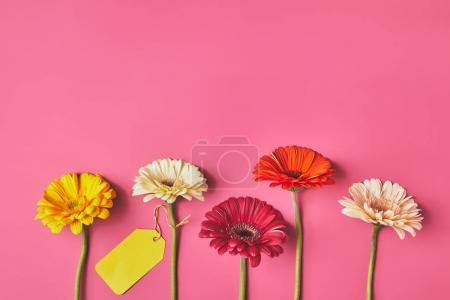 Photo for Top view of colorful Gerbera flowers in row with blank tag on pink, mothers day concept - Royalty Free Image