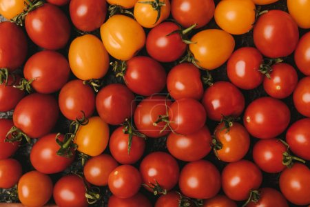 elevated view of ripe red and orange tomatoes