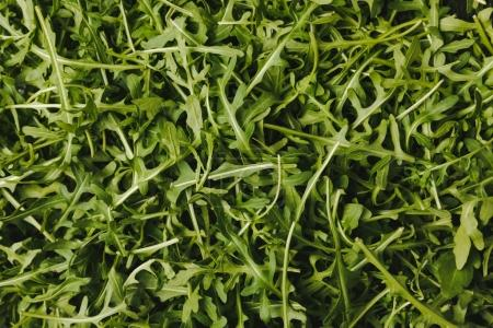 top view of green ripe arugula leaves