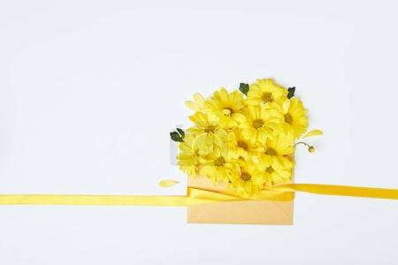 Yellow chrysanthemum flowers in envelope with ribbon isolated on white