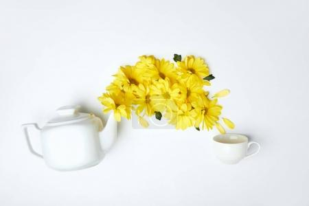 Pouring yellow chrysanthemums from white teapot into cup isolated on white