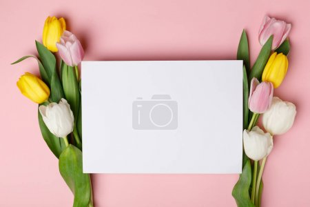 Spring tulip flowers with blank paper isolated on pink