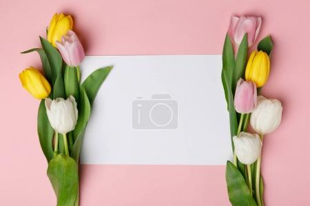 Colorful tulips with blank paper isolated on pink