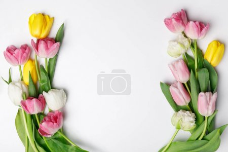 Photo for Tender spring tulips isolated on white - Royalty Free Image