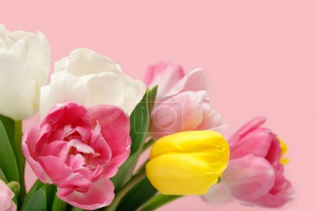 Photo for Bouquet of colorful spring tulips isolated on pink background - Royalty Free Image