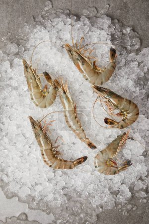 Photo for Top view of raw prawns on crushed ice - Royalty Free Image