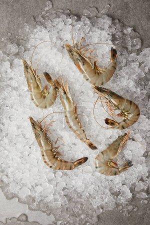 Photo pour Vue de dessus des crevettes crues sur la glace concassée - image libre de droit