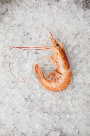 top view of cooked prawn on crushed ice