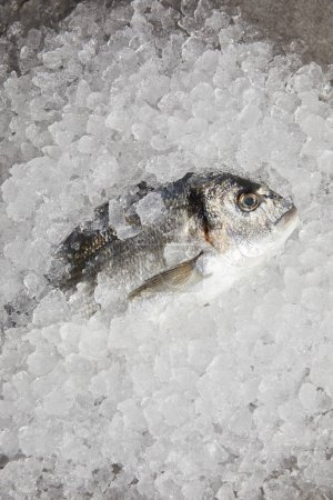 top view of raw gilt-head bream incrushed ice