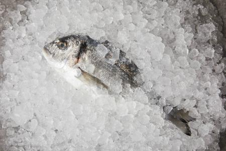 top view of raw fish on crushed ice