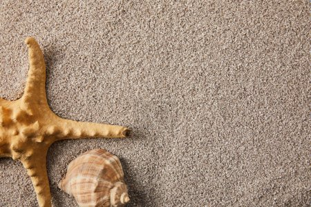 Photo for Top view of arranged sea star and seashell on sand - Royalty Free Image