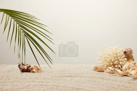 close up view of arranged green palm leaf, coral and seashells on sand on grey background