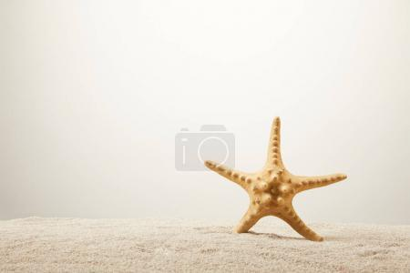 close up view of sea star on sand on grey background
