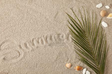 top view of green palm leaf, seashells and summer inscription on sand