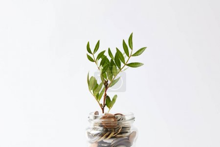 coins in glass jar with growing plant isolated on white