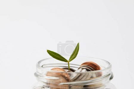 close-up shot of various coins in mason jar with growing sprout isolated on white
