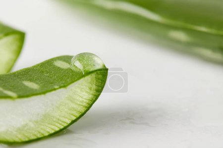 Photo for Closeup view of aloe vera slice with juice - Royalty Free Image