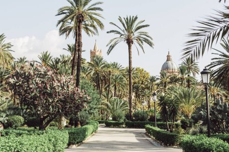 Photo for PALERMO, ITALY - OCTOBER 3, 2019: green palm trees in garden villa bonanno near cattedrale di palermo - Royalty Free Image