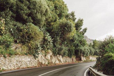 Photo pour Arbres verts près de la route dans la savane, en italique - image libre de droit