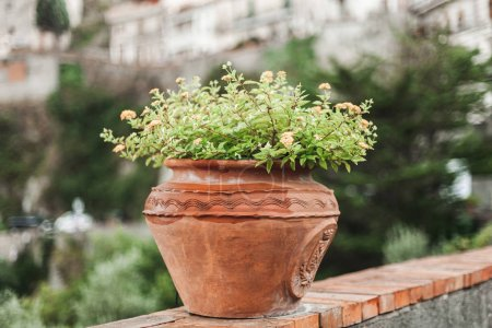 Photo for Selective focus of green plant with flowers in flowerpot - Royalty Free Image