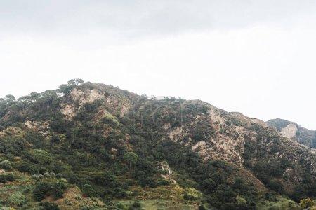 Photo pour Des arbres et des plantes vertes dans des montagnes tranquilles contre ciel - image libre de droit
