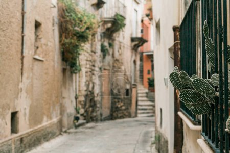 Photo for Selective focus of green cactus near narrow street in ragusa, italy - Royalty Free Image