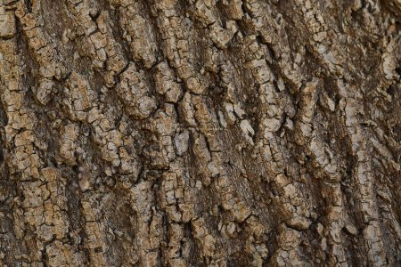 Photo for Textured background of dark bark of tree with copy space - Royalty Free Image