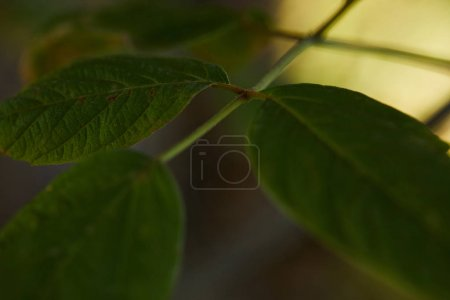Photo for Close up view of green and bright leaves outside - Royalty Free Image