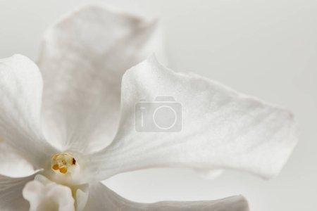 vista de cerca de la flor de la orquídea aislada en blanco