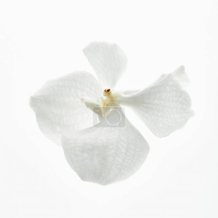 Photo for Beautiful orchid flower isolated on white - Royalty Free Image