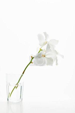 Photo pour Belles fleurs d'orchidée sur branche en verre isolé sur blanc - image libre de droit