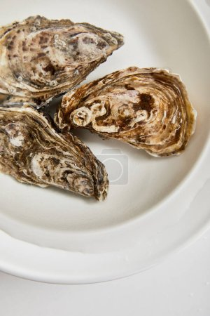 Photo for Top view of oysters in bowl with water isolated on white - Royalty Free Image