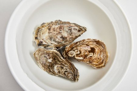 Photo for Top view of bowl with water and oysters isolated on white - Royalty Free Image