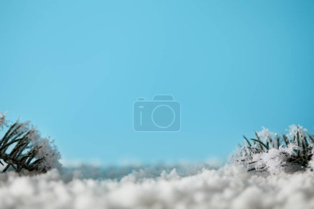 Photo pour Spruce branches in snow on blue for christmas background - image libre de droit