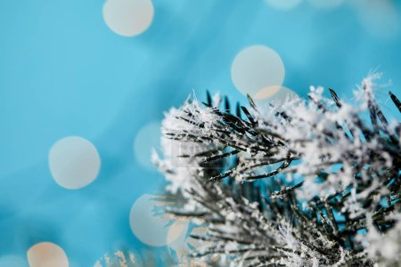 Photo pour Close up of spruce branches in snow with christmas lights bokeh on blue - image libre de droit